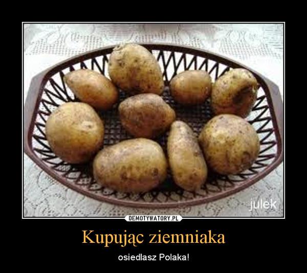 Kupując kebaba osiedlasz Araba VS kupując ziemniaka osiedlasz Polaka
