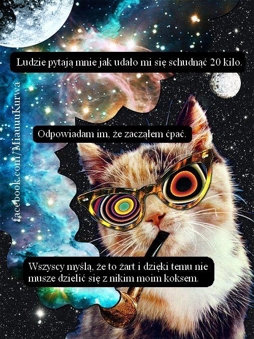 miau3